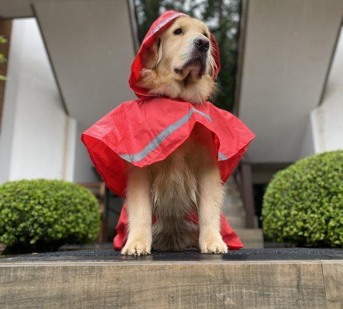 Foto-4-Malu-capa-chuva